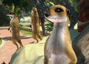 Meerkat-ztuac
