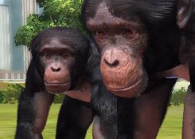 File:Western-chimpanzee-ztuac.png