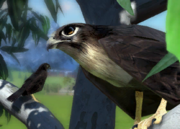 Black-falcon-ztuac