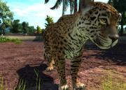 Goldmans-jaguar-ztuac