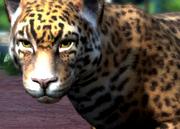 Paraguay-jaguar-ztuac