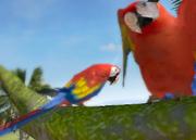 Scarlet-macaw-ztuac
