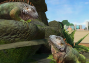Green-iguana-ztuac