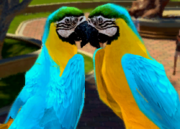 Blue-and-yellow-macaw-ztuac
