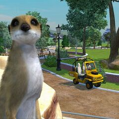 A meerkat and a buggy