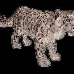 Snow Leopard remake