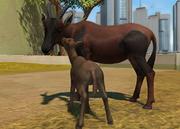 Topi-antelope-ztuac