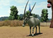 Arabian-oryx-ztuac