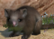 Common-ringtail-possum-ztuac