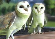 Common-barn-owl-ztuac
