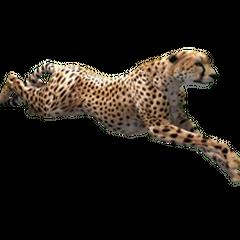 Cheetah remake.