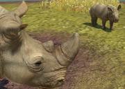 Southern-white-rhinoceros-ztuac