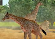 West-african-giraffe-ztuac