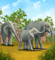 List of Official Animals in Zoo Tycoon | Zoo Tycoon Wiki