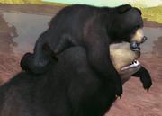 Himalayan-black-bear-ztuac