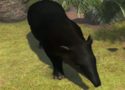 Mountain-tapir-ztuac