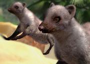Banded-mongoose-ztuac