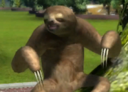 Hoffmanns-two-toed-sloth-ztuac