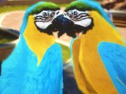 Blue-and-yellow-macaw-zt