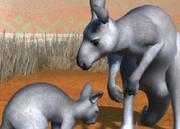Eastern-grey-kangaroo-ztuac