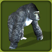 Mountain Gorilla2