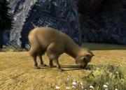 Suri-alpaca-ztuac