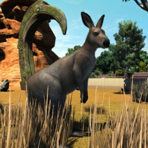 Red Kangaroo appears in Zoo Tycoon: Ultimate Animal Collection