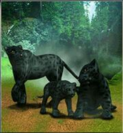 Black Leopard ZT