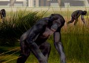 Bonobo-ztuac