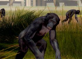 File:Bonobo-ztuac.png