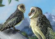 Australian-masked-owl-ztuac