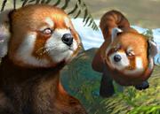 Red-panda-ztuac