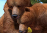 Himalayan-brown-bear-ztuac