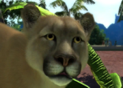 Costa-rican-cougar-ztuac