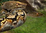 Reticulated-python-ztuac
