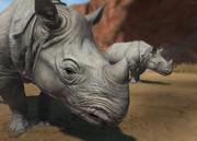 Javan-rhinoceros-ztuac