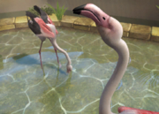 Greater-flamingo-ztuac