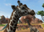 Nubian-giraffe-ztuac