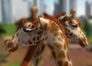Angolan-giraffe-ztuac