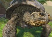 Galapagos-giant-tortoise-ztuac