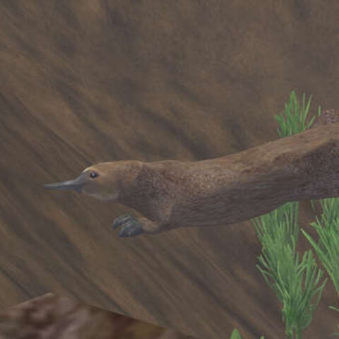 An image of the platypus as a fan-made creature from <a href=
