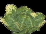 Lettuce (Feral Designs)