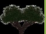 Velvet Mesquite (JimmyzHoopz)