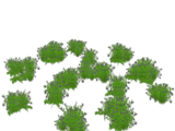 Bog Billberry (Holden)