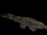 Nile Crocodile (Denny31x)