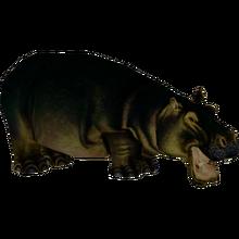 Lesser Malagasy Hippopotamus (Dinosaur)