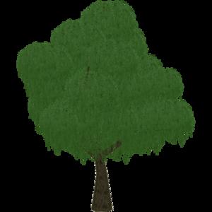 Weeping Willow (SilesianTomcat)