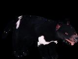 Tasmanian Devil (Hispa Designs)