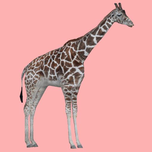 Rothschild S Giraffe Robert Royboy407 Amp Tom Zt2