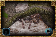Goliath Birdeater (HENDRIX & Zerosvalmont)